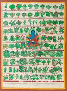 Thangka painting featuring Bhaisajyaguru, the master of remedies, sitting cross legged and surrounded by different herbs used by traditional Tibetan medicine Tibetan Art, Tibetan Buddhism, Buddhist Symbols, Thangka Painting, Buddha Art, Mandala Drawing, Ancient Art, Animal Quotes, Medicine