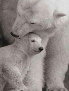 A Loving Embrace!
