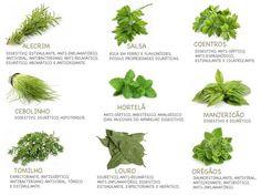 Ervas e temperos! O poder das ervas aromáticas.
