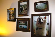 DIY Picture Wall http://downshannonlane.com