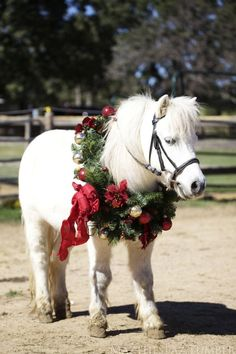 Pony wearing a wreath...