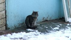 How to care for feral cats during the winter #cats #animals #winter