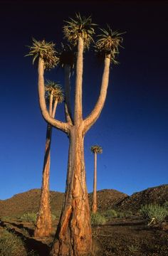 Go to the Richtersveld Cultural and Botanical Landscape