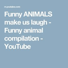 Funny ANIMALS make us laugh - Funny animal compilation - YouTube