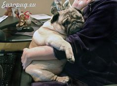 Mom working at home http://europug.eu/fat-lovely-pug/
