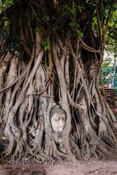 ayutthaya, market, night, temples, elephants, statues, buddha, lying, food, thai, old capital,