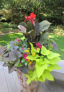 Great combo idea for your AAS Winners Canna 'South Pacific Scarlet' and Canna 'Tropical Rose'