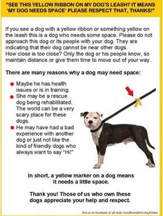 If You See a Yellow Ribbon on a Leash, Give That Dog Space