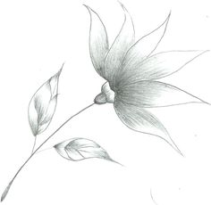 easy flowers to sketch – thefrangipanitreecom sketch drawing easy - Sketch Drawing Simple Flower Drawing, Easy Flower Drawings, Girl Drawing Easy, Pencil Drawings Of Flowers, Easy Drawings Sketches, Easy Drawing Steps, Easy Drawings For Kids, Sketch Drawing, Drawing Flowers