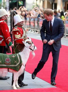Prince Harry chats to Sgt Major Mark Jackson who is looking after the Regimental Mascot of the 3rd Battalion Welsh Guards 'Shenkin' as he arrives for the 50th anniversary screening of Zulu at Odeon Leicester Square on June 10, 2014