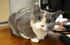 Image result for cats