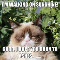 Grumpy cat meme. Sunshine.
