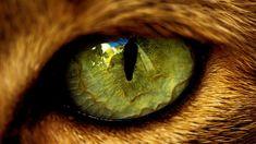 #Cat #Eye Macro