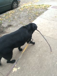 Cooper and stick