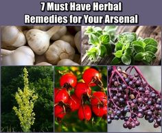 7 Must Have Herbal Remedies for Your Arsenal