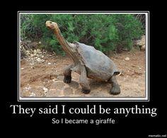 Turtle meme. :)