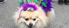 14 Spooktacular Halloween Events to Show Off Your Dog's Costume