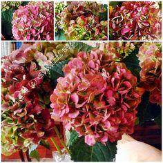 http://svolazzieventi.blogspot.it/2012/10/le-ortensie-autunnali.html