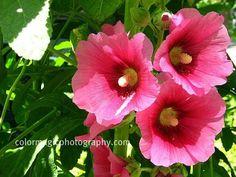 Wildflowers-garden plants-Macro Flowers-Saturday