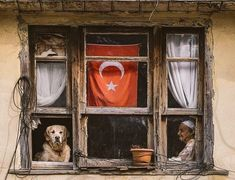 Istanbul, Kangal Dog, The Golden Years, Old Windows, Dream City, Pretty And Cute, Cute Animals, Artsy, Creatures