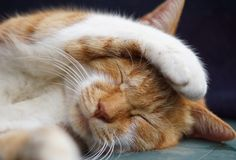 Slaperige kattenweetjes - Hart voor Dieren