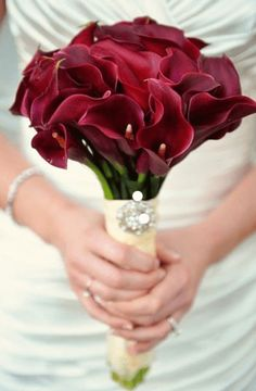 Facts on calla lily, including biology of the Calla lily plant, growing and care tips with pictures and recommended Calla lilies bouquet. Lily Bouquet Wedding, Calla Lily Bouquet, Bridal Bouquet Fall, Fall Bouquets, White Wedding Bouquets, Calla Lilies, Burgundy Wedding, Bridal Flowers, Lilies Flowers