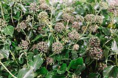New Covent Garden Flower Market In Season Report November 2017 Rona Wheeldon Flowerona British Berried Ivy At Porters Foliage