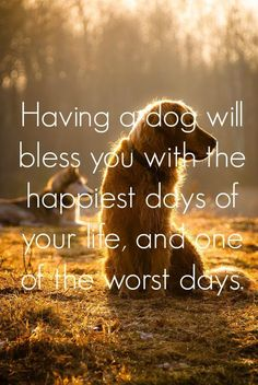 Having a dog will bless you with the happiest days of your life, and one of the worst days. Dog quote | Pet quote | animal quote