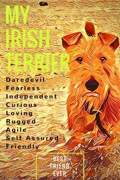 Irish Terriers ☘ Cute Dogs Breeds, Cat Breeds, Wag The Dog, Scottish Deerhound, Irish Wolfhound, Cute Cats And Dogs, Irish Setter, Terrier Dogs, Wild Things