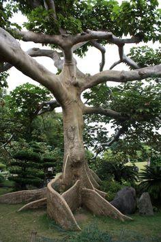 Dominican Republic el botanico jardin japones