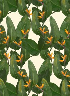 tropical floral by Laura Graves
