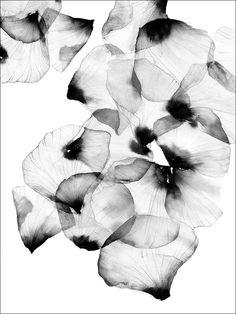 Vallmo poster - 30x40 från Magdalena Tyboni Design hos ConfidentLiving.se