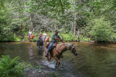 Sharing the trail with some equine friends. Crossing South Mills River in Pisgah National Forest.