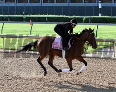 Empress Of Midway on the track at Churchill Downs on May 1, 2014. Photo By: Chad B. Harmon