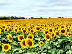 30 Things You Need To Know About Kansas Before You Move There