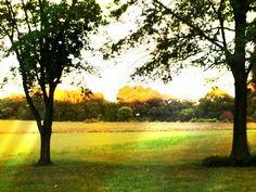 Sunset on treetops