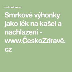 Smrkové výhonky jako lék na kašel a nachlazení - www.ČeskoZdravě.cz