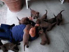 Cuteness Break: �Puppies Attack� Compilation