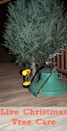 Live Christmas tree care, learn how to care for a live tree to keep it healthy all season long!