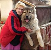This is Danka Kantar, a Serbian rescuer who cares for 100 spayed/neutered dogs and cats. She's in trouble now because her husband is seriously ill with a heart condition and has become unable to work. While the couple provided care for the animals on their own for so long, they now need help. Harmony Fund has been providing it.
