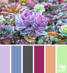 succulent color - design seeds