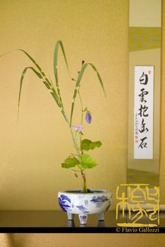 A chabana, flower arrengement for the tea ceremony. © Flavio Gallozzi - All rights reserved