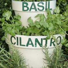 Here's The Easiest Way To Grow Your Own Herbs