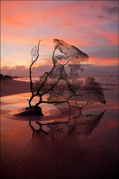 Coral Sunset, Varadero, Matanzas, Cuba, by Enri Turrini, on flickr.