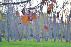alejandra koch, otoño