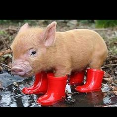 This little piggy got caught in the rain.