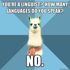 youre a linguist how many languages do you speak no - Linguist Llama