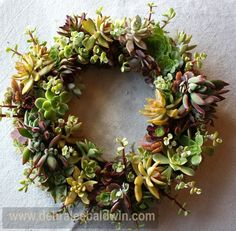 Denise used springs of portulacaria in this wreath. They make it sparkle.