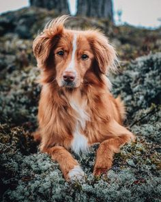 Hiking with our office Toller. It's always good to have a holiday. For dogs too 🐾 - - Rats, Koi, Finland, Hiking, Holiday, Nature, Animals, Instagram, Walks