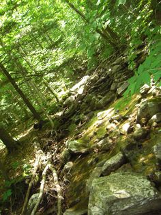 Keewaydin Trail, Vermont Maple Syrup, Vermont, Climbing, Trail, Places, Nature, Summer, Naturaleza, Rock Climbing